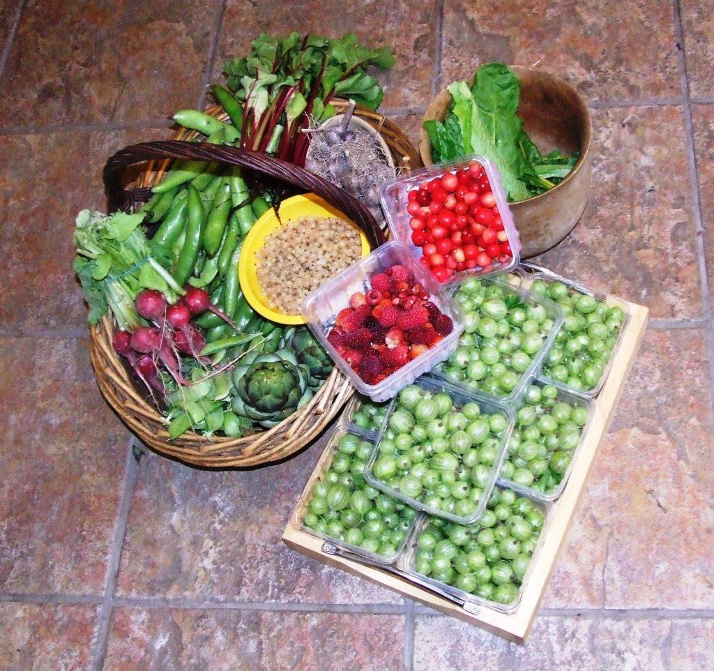 Harvest 24.7.13 5