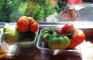 Tomato Marmande 17.8.13